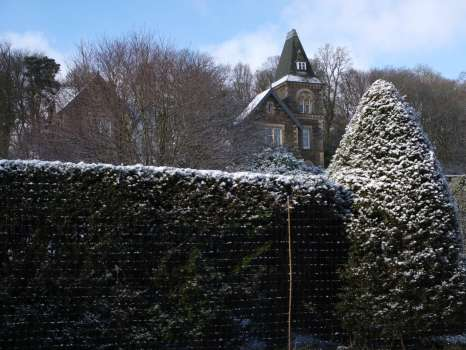 Plastic deer netting used here to protect our yew hedges