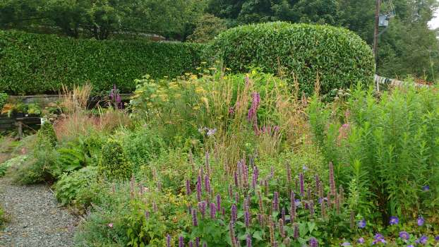 Agastache and other late summer flowers with michaelmas daisies to follow