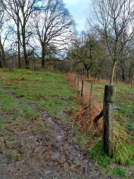 The site of the new native hedge to be planted next week if it dries out a bit