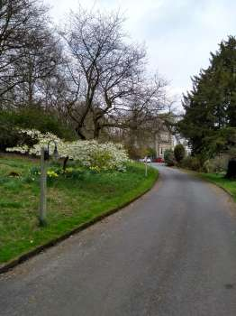 Prunus 'Tai Haku' by the entrance drive to Yewfield