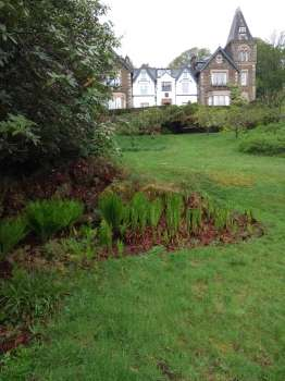 A fern corner in a wet bit of ground on the edge of the lawn meadows