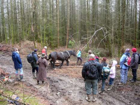 George Read demonstrating horse logging at a Woodland Education Programme outing at our plantation