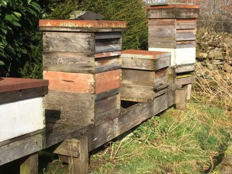 The beehives this afternoon, with bees at the mouths of the two active hives