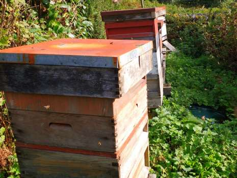 Our bee hives full with winter stores of honey