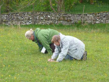Surveying grassland species in Middle Field