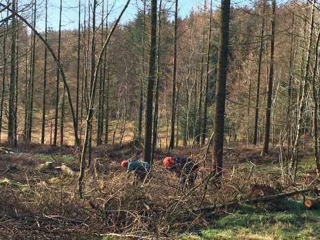 Gary and his forestry apprentice Will clearing the ground for the new enclosure