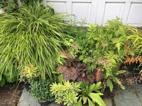 All these foliage plants in a shady spot needed watering at least once a day during the heatwave