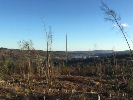 New views over Esthwaite Water, showing an exposed birch with its top blown off in the wind