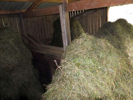 Four racks of damp hay, waiting for sunny weather to dry it before baling