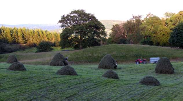 Racking hay in High Field in the late evening before rain arrives