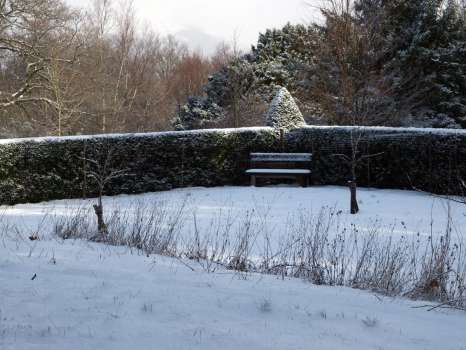 The snow emphasises the structure of the hedge and picks out the plastic deer netting