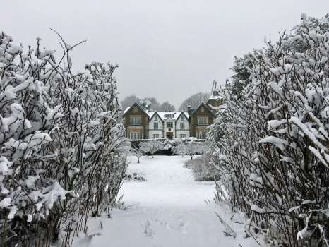 Yewfield in the snow