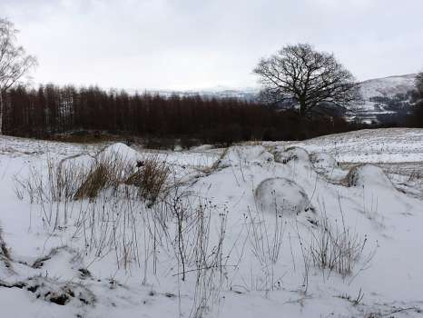 The hay meadows last weekend with snow highlighting the anthills